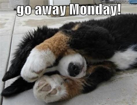 Monday Dog Meme - funny memes on pinterest dog memes cat memes and meme