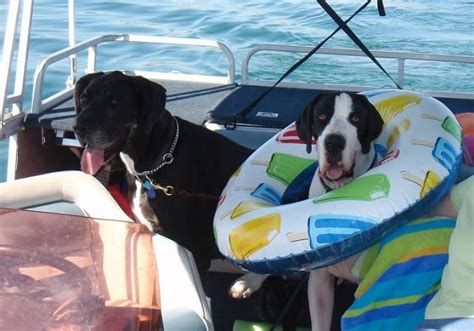 puppies on the run hudson nh pets on your pontoon pontoon forum gt get help with your pontoon project