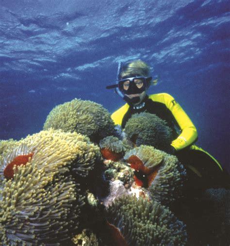 scuba diving in mozambique books scuba diving