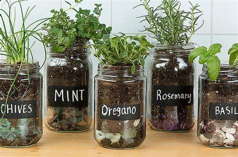diy mason jar herb garden plant instructions