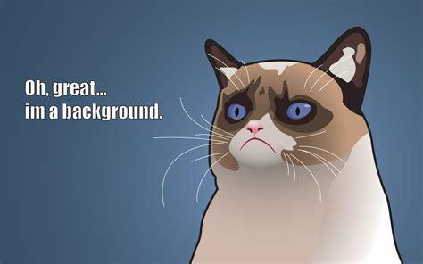 Funny Meme Desktop Backgrounds - angry cat meme funny wallpaper for desktop pc mobile