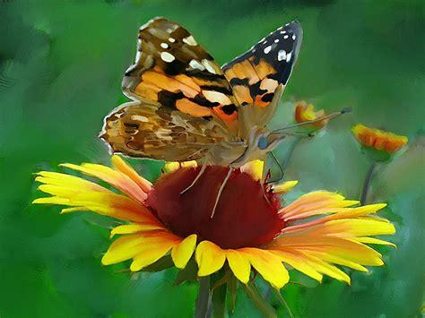 imagenes de mariposas posadas en flores dibujos de mariposas