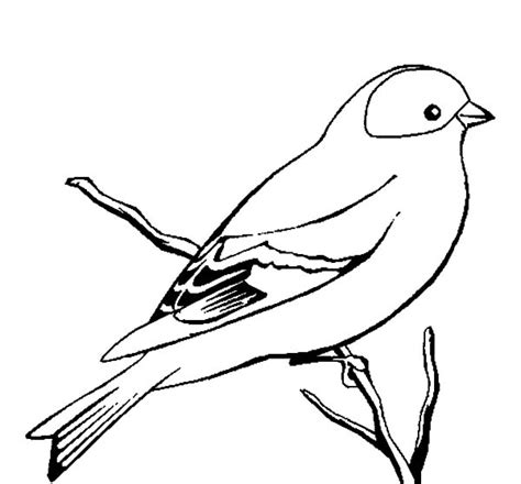 coloring pages canary bird wild canary bird coloring pages best place to color