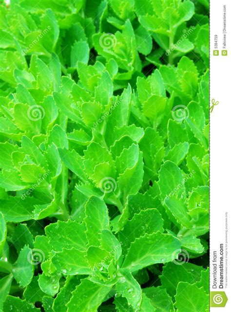 green foliage outdoor plants green plant leaves royalty free stock images image 5384759
