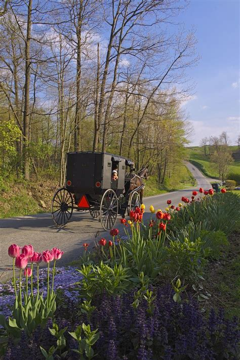 52 best amish colors images on amish country