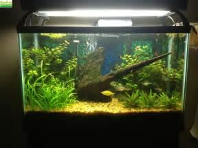 29 Gallon Fish Tank Combo Jake?s 29 Gallon Planted Tank   Dustin's