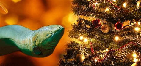 a twinkling christmas tree powered by an electric eel