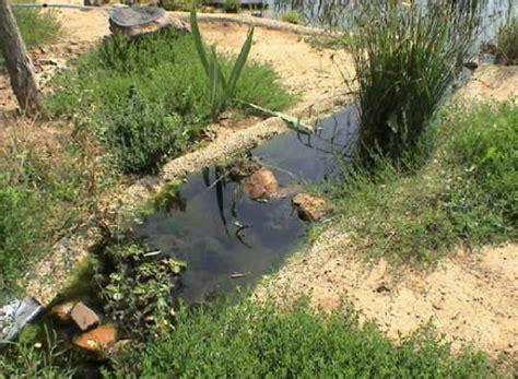 Bachlauf Richtig Bepflanzen bachlauf bauen bachlauf planen