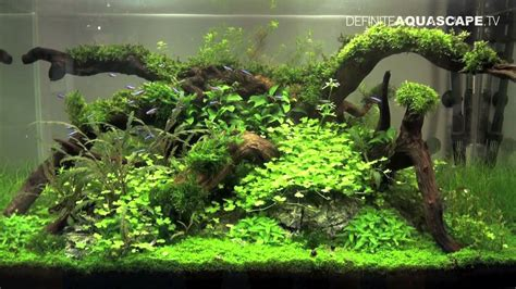 how to make aquascape aquascaping planted aquarium at tropica s booth
