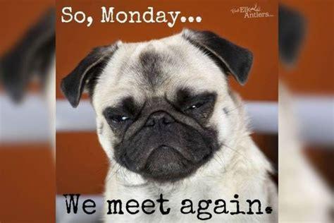 Monday Dog Meme - happy monday meme funny it s monday pics and images