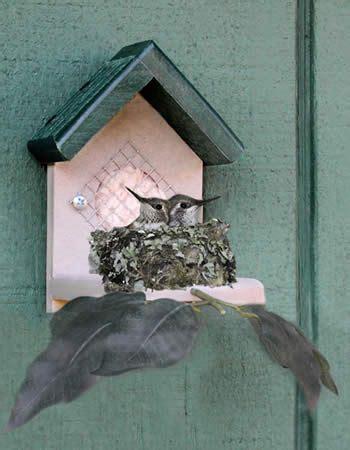 hummingbird house building a hummingbird feeder woodworking projects plans