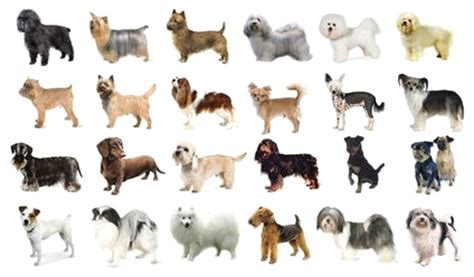 most popular breeds 2017 the top 10 most popular breeds of in the world