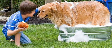 how often to bathe a puppy how often should i bathe my care community