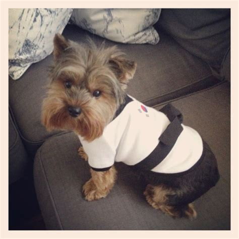 crate for yorkie the 89 best images about for my yorkie on yorkie beds and