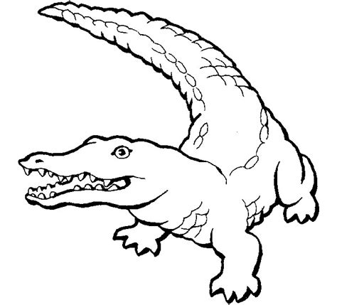 alligators coloring pages free printable alligators