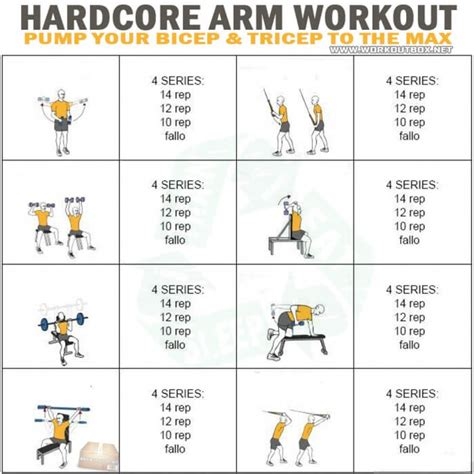 arm workout your bicep tricep the max