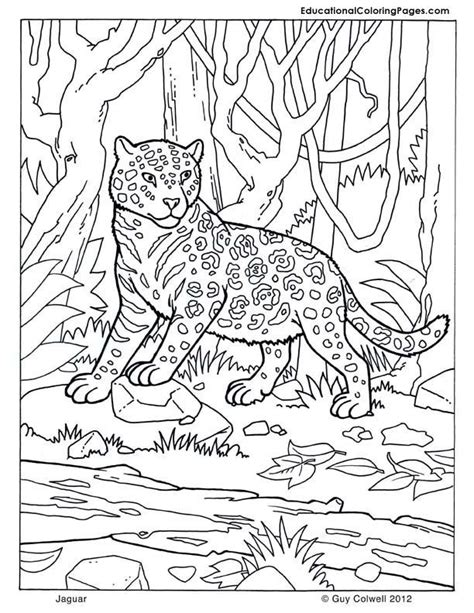 coloring books for toddlers animals coloring children activity books for ages 2 4 4 8 boys early learning relaxation for workbooks toddler coloring book volume 1 pictures of baby jaguars coloring home