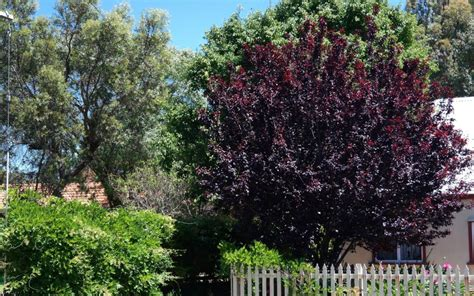 deciduous trees for smaller urban gardens lakeside