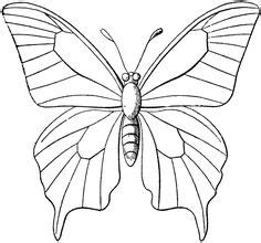 rainforest butterfly coloring pages 1000 images about the great kapok tree on pinterest