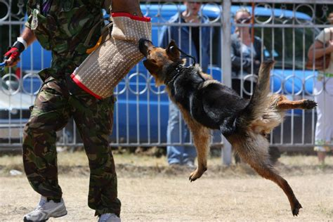 how to dogs to attack on command how do their dogs to attack you ll be amazed to