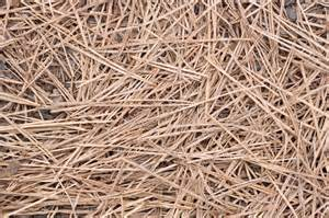 pine straw mulch uses learn about pine straw mulch