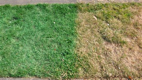 spray painting grass green how to remove spray paint from grass how does it