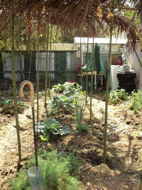 Trellis Plants For Shade trellis shade cooler plants brisbane local food