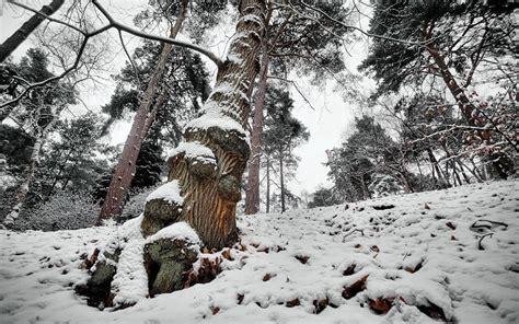 imagenes de invierno para fondo de pantalla gratis paisajes invierno nieve hills im 225 genes gratis fondos de