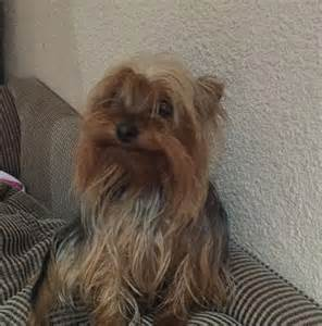 Small Dogs Looking For New Home 143 Already Adopted Marmite Lives In Krugersdorp He