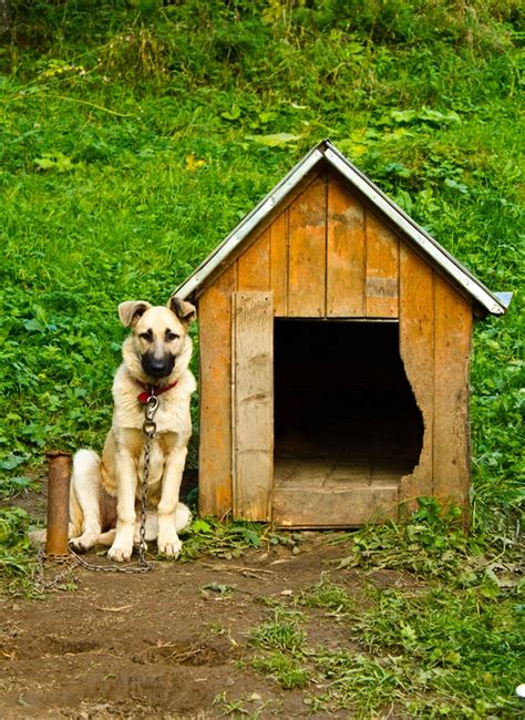 where do dogs live this is sadness for the do not chain up your dogs to live in the