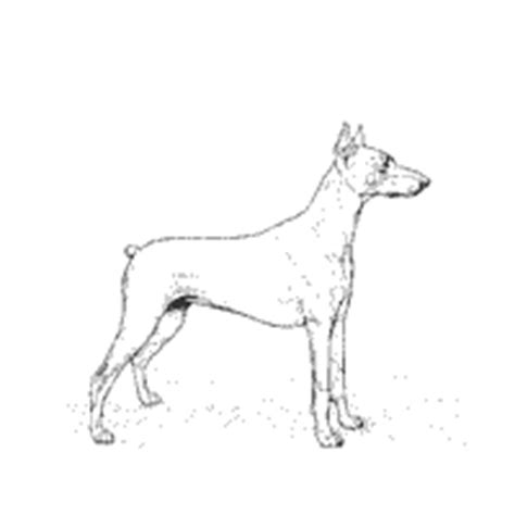 Doberman Pinscher Coloring Page Dog Breeds Picture Doberman Coloring Pages