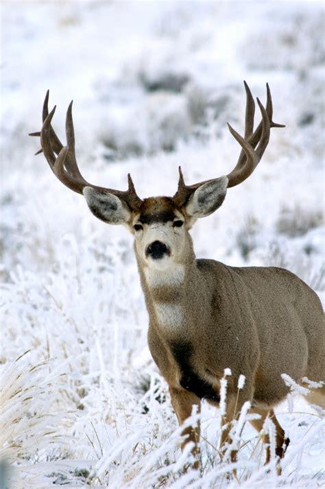 google images deer google image result for http informedfarmers com wp