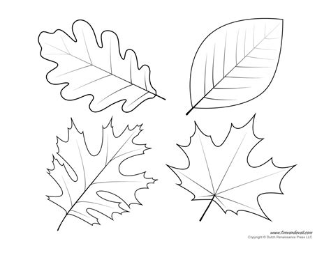 Free Coloring Pages Of Leaf Templates