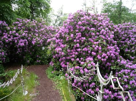flowering trees and shrubs trees and shrubs product range trowbridge garden centre