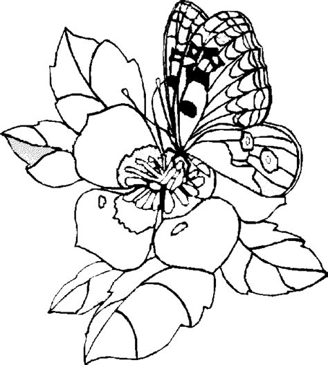 butterfly coloring pages butterfly wildflowers