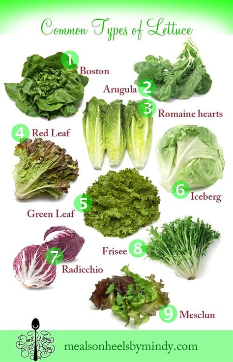 vegetables types of salaad dweh lettuceguide600x932 salad on the side in 2019 types of lettuce lettuce