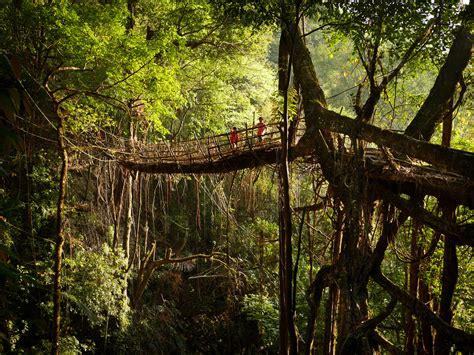 Living Bridges by Living Root Bridges Speakzeasy