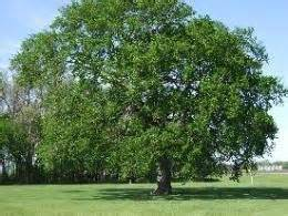 elm tree symbolism what is your tree sign spiritual meanings from an ancient