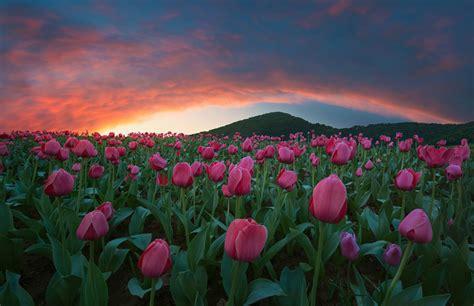 imagenes bonitas de paisajes con flores banco de im 193 genes los paisajes con flores lagos r 237 os