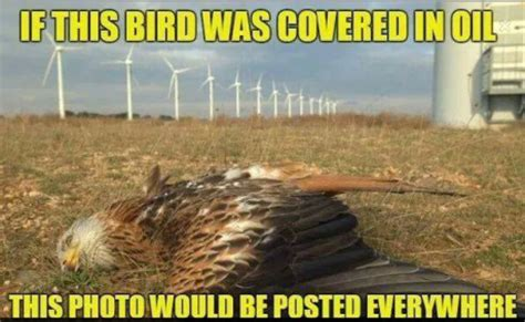Wind Meme - oily bird meme speaks the truth birds and blades
