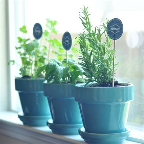 tips and tricks to maintaining an indoor kitchen herb printables archives creative juice