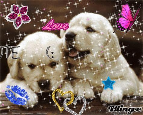 imagenes gif geniales perritos enamorados fotograf 237 a 95495934 blingee com