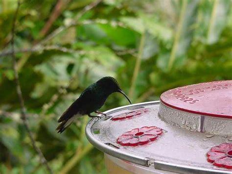 heat l for hummingbirds journey hummingbirds