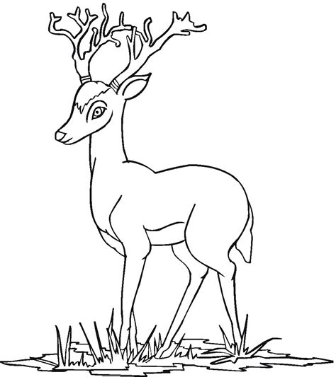free coloring pages of deer