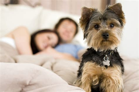 where should a puppy sleep at should dogs sleep in your bed care made simple beds and costumes