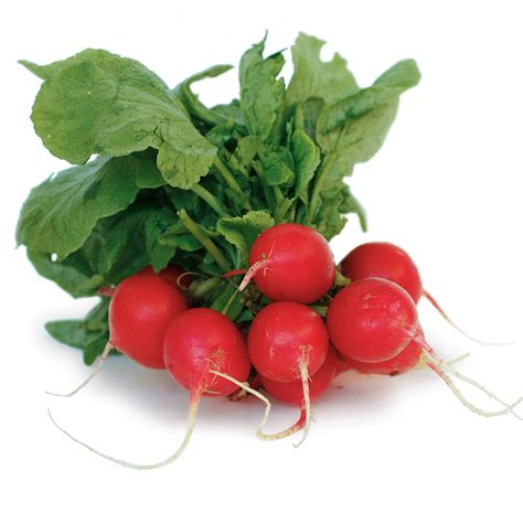 Ripped List White Rawis radishes ingredient finecooking