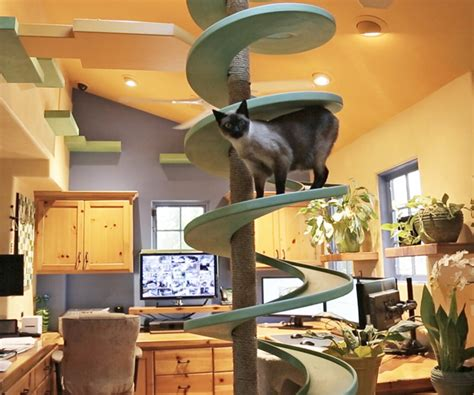 cat friendly house design the cat friendly house