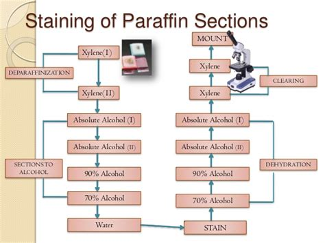 paraffin sections staining and collodionization