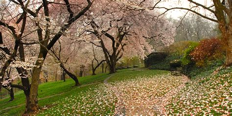 Dumbarton Oaks Gardens by Gardens Dumbarton Oaks
