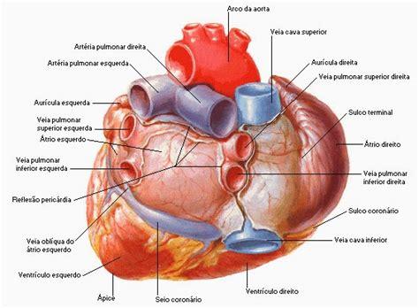 imagenes netter pdf anatomia humana